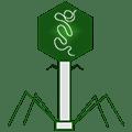 Bacteriophage.news
